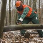Was der Waldarbeiter nicht will…