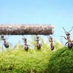 Warum ist die Leistung bei Teamarbeit höher?